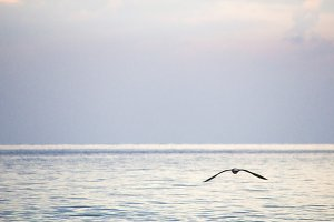 Sea. Beautiful seascape. Seagull