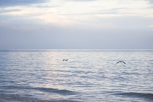 Sea. Beautiful seascape. Seagulls