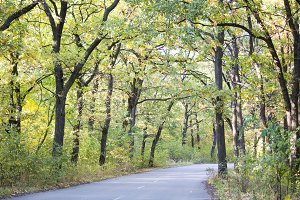 Beautiful autumn forest. Road