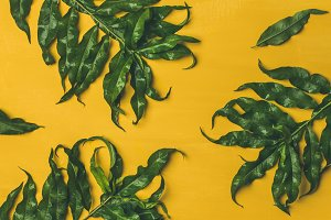 Tropical tree green leaves over bright yellow background, wide composition
