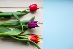 Three tulips on wooden background