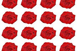 red rose pattern