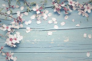 Background with almond flowers