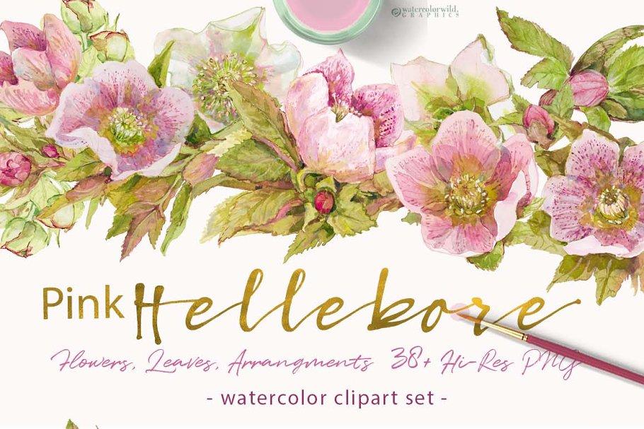 Pink Hellebore-Floral Clipart