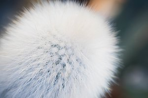 Fluffy cactus plant close up texture