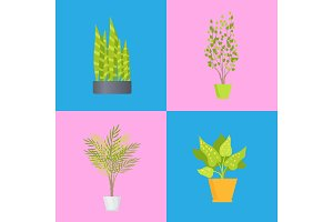Interior Decoration Plants Set Vector Illustration