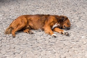 Dog fast asleep on cobbled payment or sidewalk