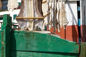 Cat fish or Cod fish drying in Camara de Lobos, Madiera
