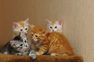 Four cute kittens