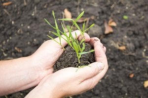 Sprout in the hands. Seedling