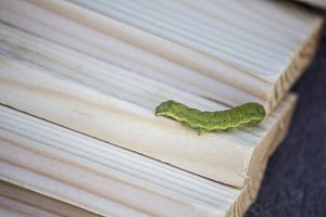 green caterpillar on wooden slats.