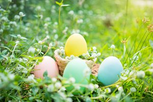 easter eggs on grass.