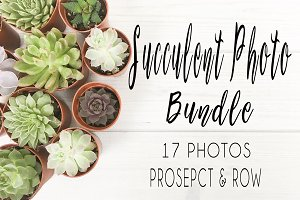 Succulent Photo Bundle
