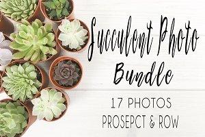 Succulent Photo Bundle