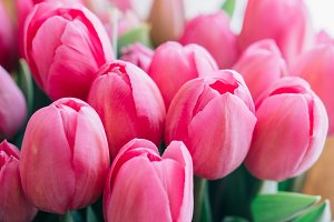bouquet of pink tulips on a white background, macro