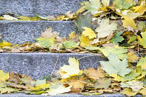 yellow leaves on granite steps