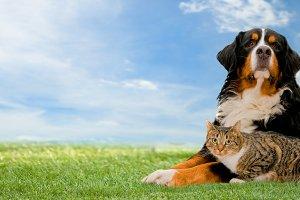 Dog and cat - panorama