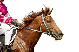 Jokey on a thoroughbred horse runs isolated on white background