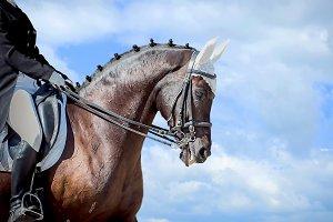 Equestrian sport - dressage head of sorrel horse