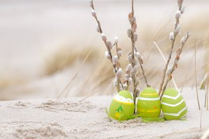 Easter eggs and catkin