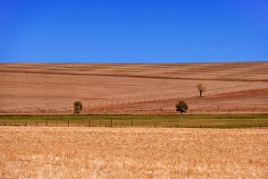Ploughed Field with trees