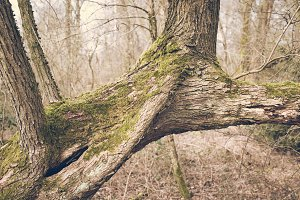 A Forest in Spring #06