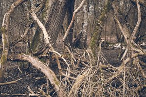A Forest in Spring #08