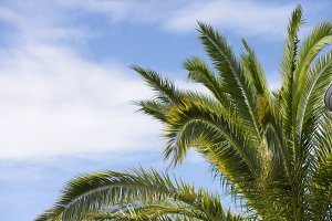 tropical palm tree and sky