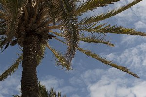 Palm tree in the beach