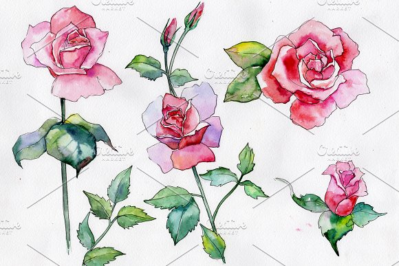 Wildflower Pink Rose Png Watercolor Illustrations Creative Market