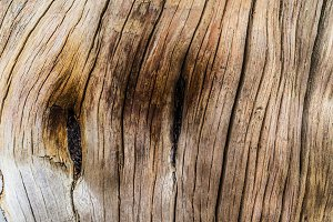 Old wood textured background
