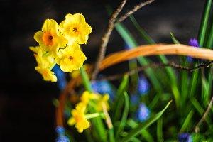 Spring floral concept