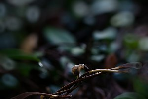 Snail, Nurture
