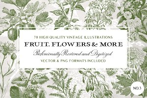 70 Flower & Fruit Illustrations No.3