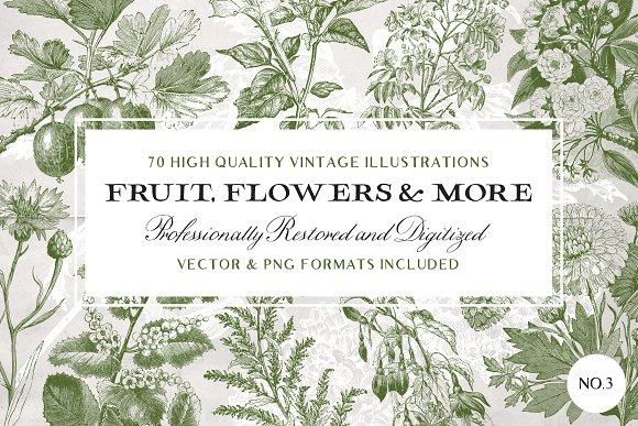 70 Flower Fruit Illustrations No.3