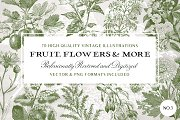 70 Flower & Fruit Illustrations No.3