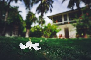 White flower bud on the green lawn
