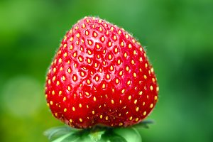 Red strawberry on green background