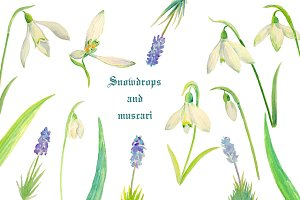 Watercolor Snowdrops & Muscari