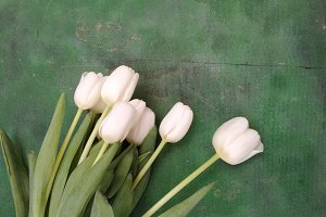 White tulips on green background