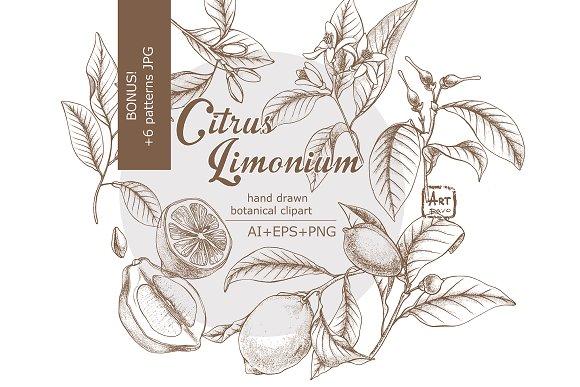 Lemon Life Botanical Illustrations