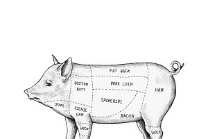 Hand drawn cut of pig