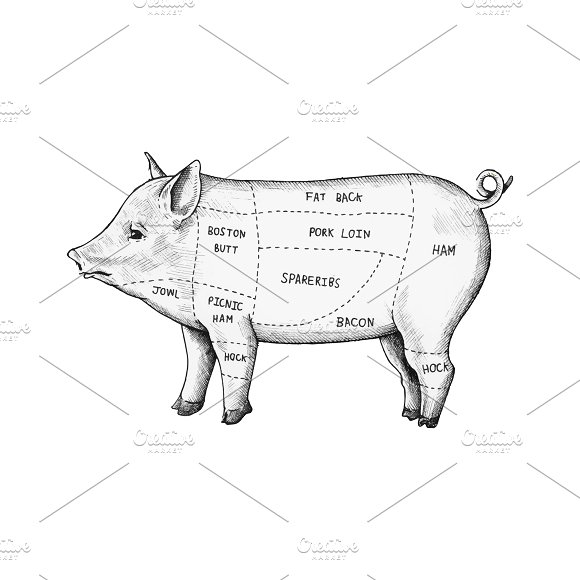 Hand Drawn Cut Of Pig