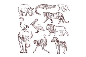 Hand drawn illustrations of african animals
