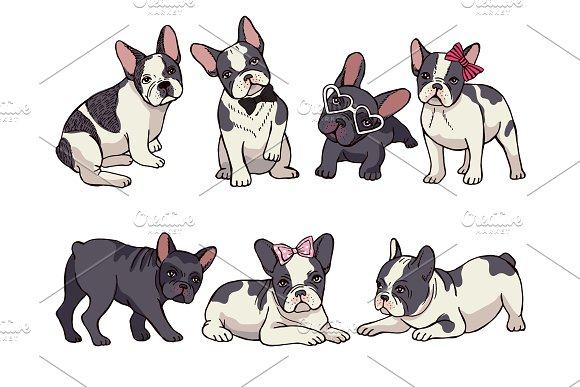 Illustrations Set Of Cute Little French Bulldog Funny Pictures Of Puppy