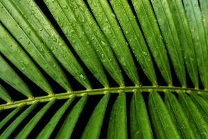 Yellow palm with water drop