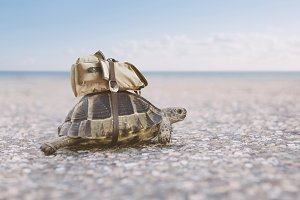 Turtle with backpack
