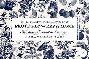 63 Fruit & Flower Illustrations No.1