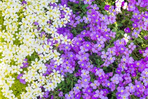 Background from spring flowers