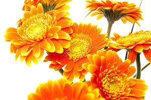 orange flower vase